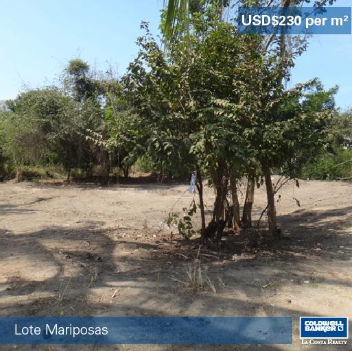 Lote Mariposas_02